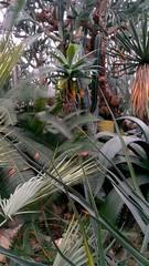 Palmen Tropen