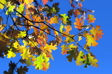 Detail of Fall Oak Leaves