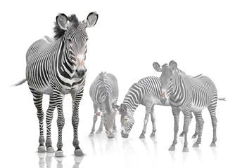 Fotobehang Zebra four zebra