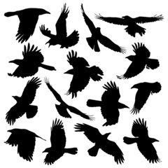 Crow Silhouette set 01