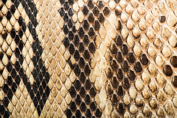 Texture of genuine snakeskin