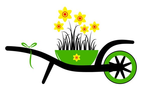 wheel barrow and daffodils