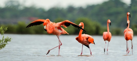 The flamingos walk on water.