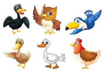 A group of birds