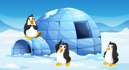 Three penguins near an igloo