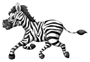 A zebra running
