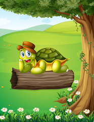 A turtle relaxing above the trunk under the tree