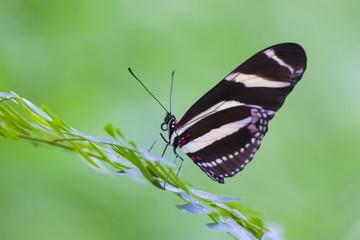 mariposa y fondo verde