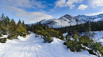 Fototapete - Polish High Tatra mountains in winter