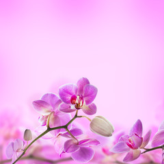 Fototapete - Floral background of tropical orchids