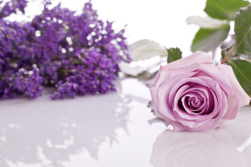 beautiful lavander and pink rose on .bright background