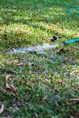 field hosepipe sprinkler grass