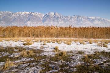 Snow Covered Mountains Behind Lakeside Highway PLant Growth Utah