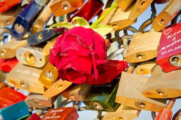 Liebesschlösser und rote Rose