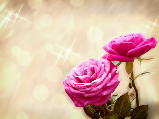 two roses are on blurred background