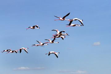 A group of Flamingo on blue sky