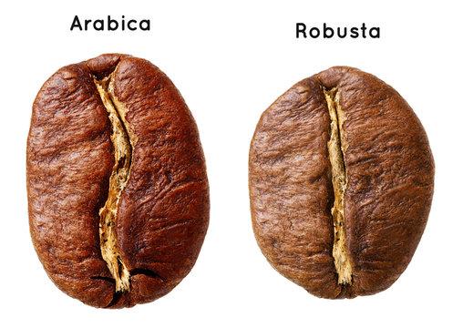 Black arabica, robusta coffee bean isolated on white background.