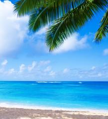 Wall Mural - Coconut Palm tree on the sandy beach in Hawaii, Kauai