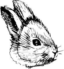 a image of a rabbit with long ears
