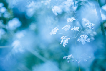 Soft blue spring background with wildflowers