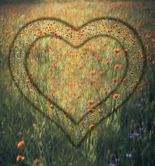 Heart frame border window meadow shape flower