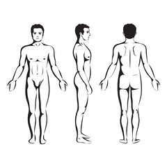 man body anatomy, human  front, back and side