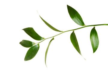One green fresh plant.