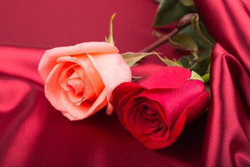 Pink and red roses on the vinous silk