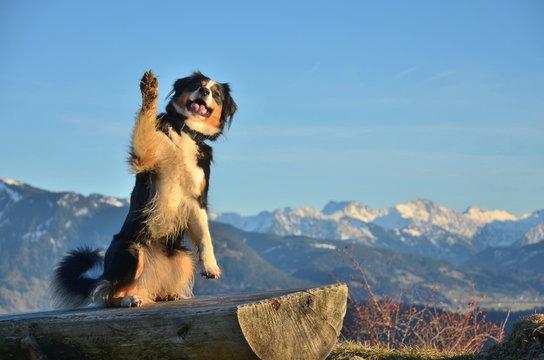Hund zeigt Pfote zum Gruss