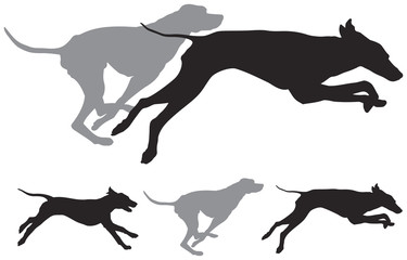 hunting dogs run