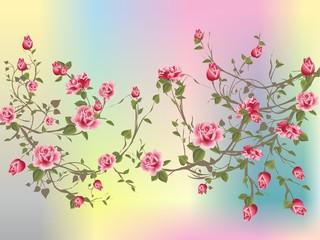 Krzew róży,
