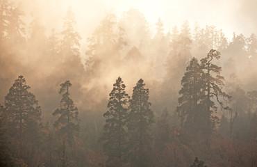 Majesty of nature: misty forest at sunrise. Himalayas.