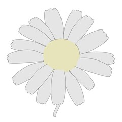 cartoon image of daisy flower