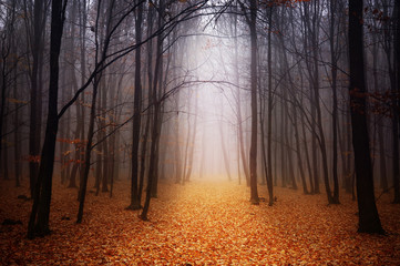 Photo sur Toile Marron chocolat Foggy forest