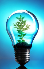 Green eco energy concept. Plant growing inside light bulb