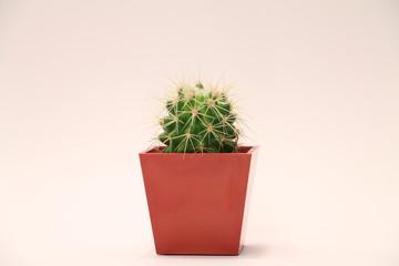specimen of succulent plant with red vase