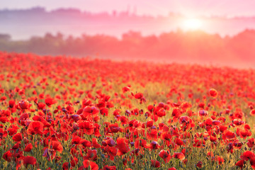 Tuinposter Platteland red poppy field in morning mist