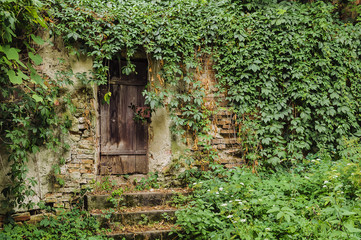 Door and wall of a house completely overgrown with  Ivy