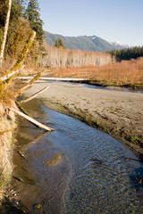Winter Along  Mountain Stream Hoh River Banks Olympic Mountains