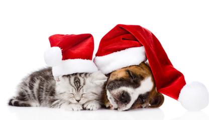 sleeping scottish kitten and puppy with santa hats. isolated