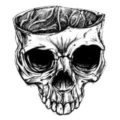 Skull drawing 02