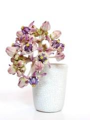 crown flower in the vase