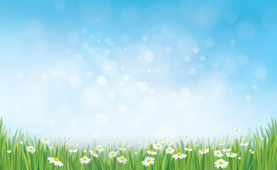 Vector sky background with grass and chamomile.