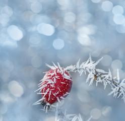 frozen hip in detail - beautiful winter picture