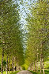 Alley in spring time