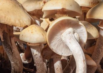 cluster of wild mushrooms