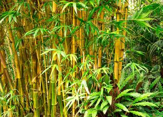 Bamboe achtergrond
