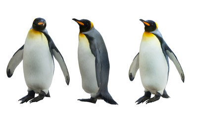 Fototapeten Pinguin Three imperial penguins on a white background