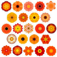 Large Selection of Various Concentric Mandala Flowers Isolated