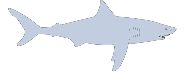 cartoon image of shark animal